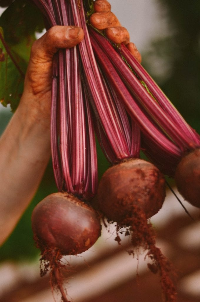 hand holding beets